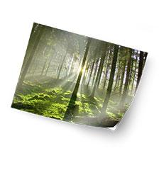 Adhesive poster - 60×40 cm (matte)